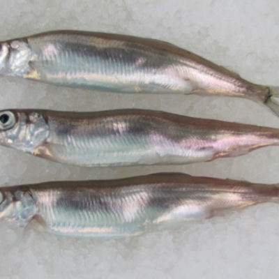 Female Caplin