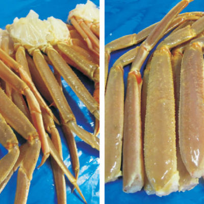 Snowcrab Raw Sections